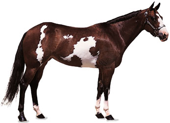 Red And White Paint Horse